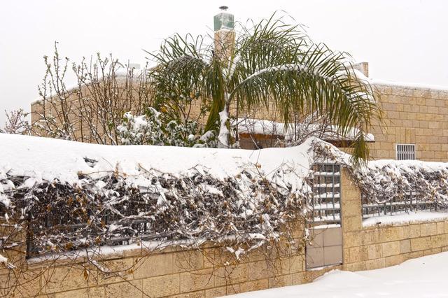 Нарядная пальма в снегу Все права защищены. 20 февраля 2015 г. © Православный паломнический центр «Россия в красках» в Иерусалиме. Использование фотографий разрешено только после получения письменного разрешения редакции нашего сайта: e-mail: ippo.jerusalem@gmail.com